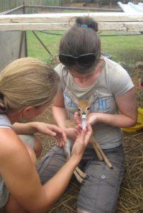 Frivilligt arbejde med dyr – ALOTT