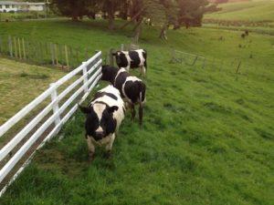 Work on a Ranch in New Zealand - ALOTT
